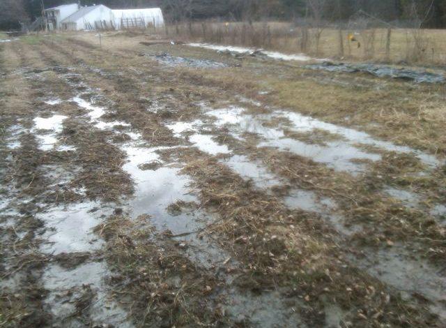 Draining Wet Fields Growing Heart Farm
