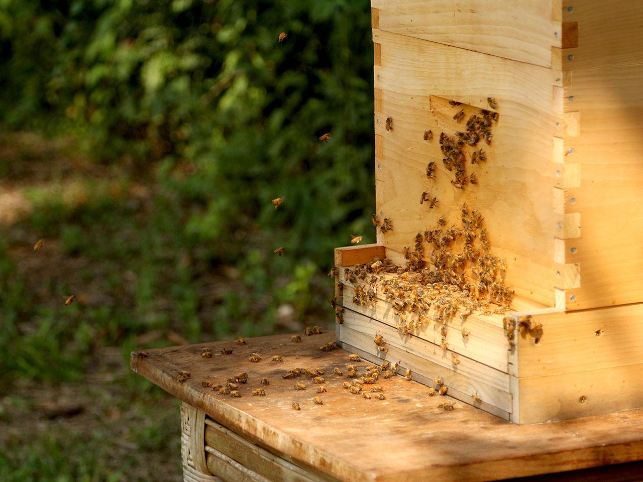 bees - organic